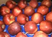 Яблоки польские широкий ассортимент сортов